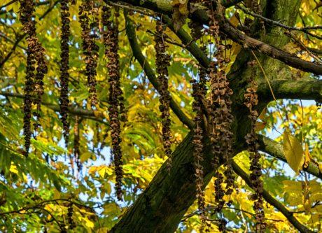 stablo, list, priroda, grana, krajolik, drvo, šuma, jesen