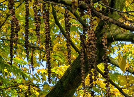 tree, leaf, nature, branch, landscape, wood, forest, autumn