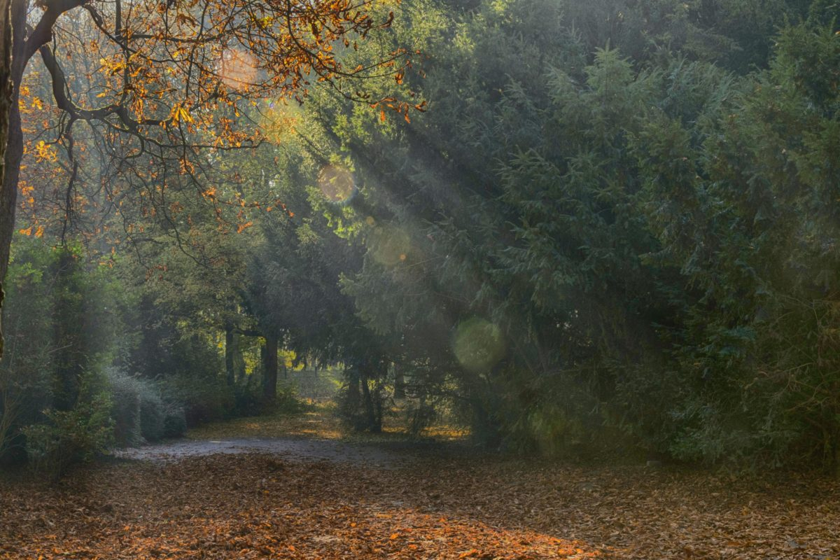 ต้นไม้, ไม้, ภูมิทัศน์, สาด, ใบ, ฤดูใบไม้ร่วง, ป่า, ใบไม้, พืช