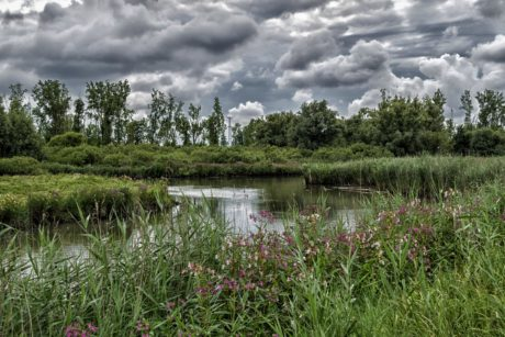 water, sky, nature, landscape, reflection, grass, lake, swamp, cloud