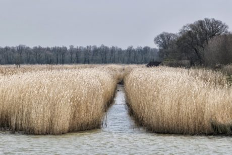 landscape, nature, swamp, field, agriculture, straw, countryside