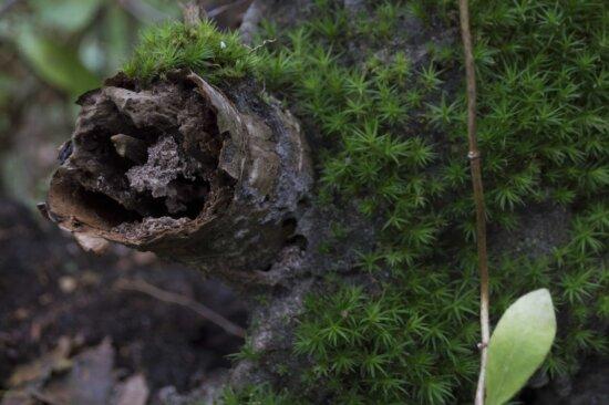 Gren Moss, frunziş, ecologie, muşchi, lichen, mediu, lemn, natura, frunze, copac, în aer liber, iarba