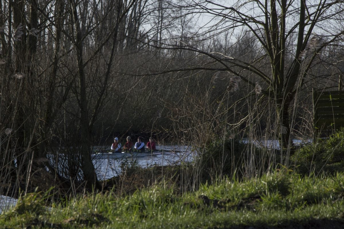 nature, canoe, sport, people, water, river, lake, landscape, tree, wood, forest