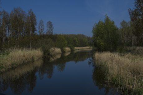 ağaç, yansıma, bataklık, nehir, Doğa, peyzaj, göl, su, ahşap