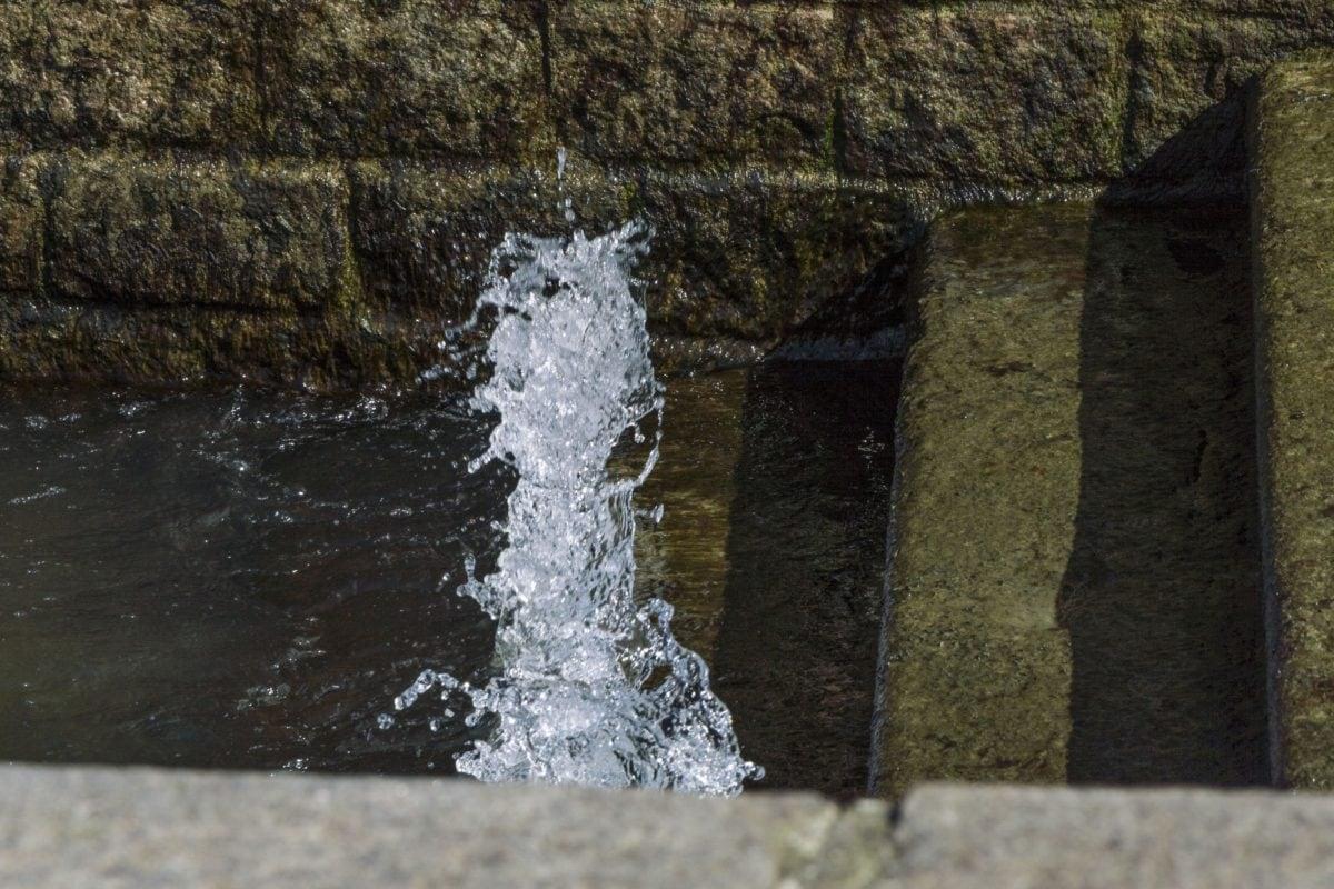 wet, water, fountain, landscape, forest, stream, outdoor