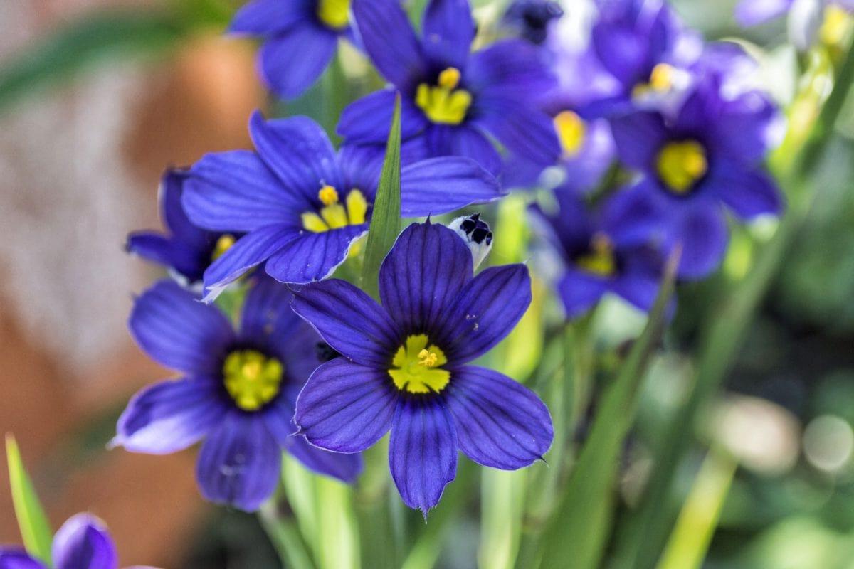 garden, nature, purple flower, plant, bloom, blossom, petal