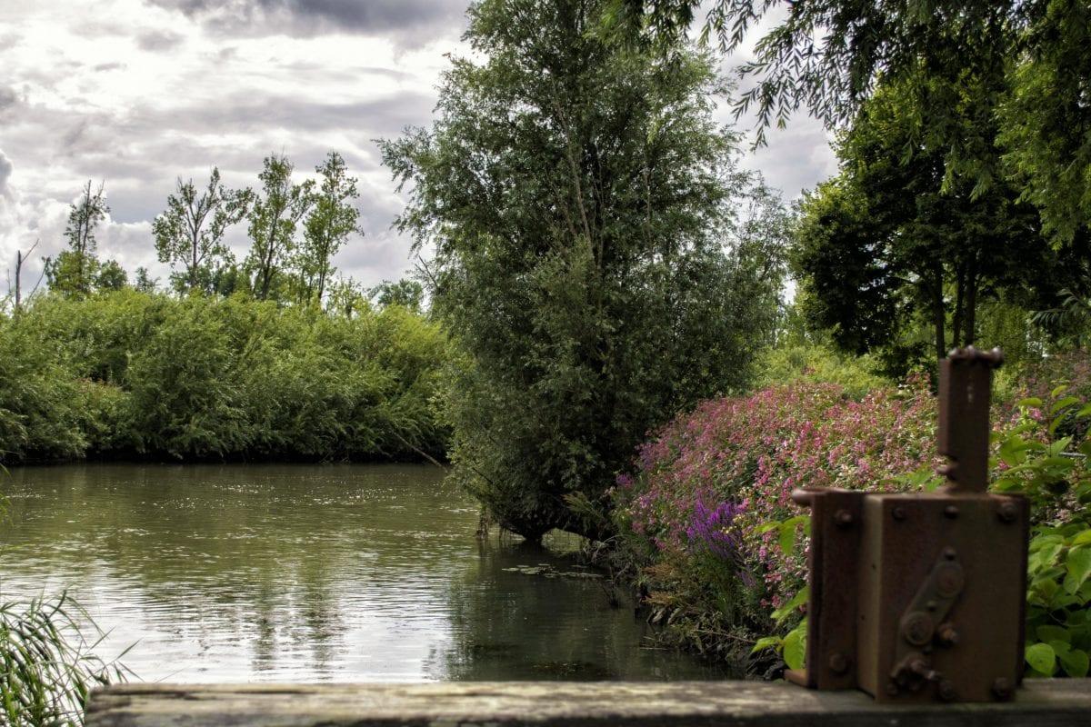 göl, nehir, Doğa, ağaç, peyzaj, ahşap, su, orman