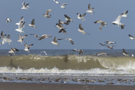 flock, water, bird, ocean, wildlife, flight, blue sky, sea, nature