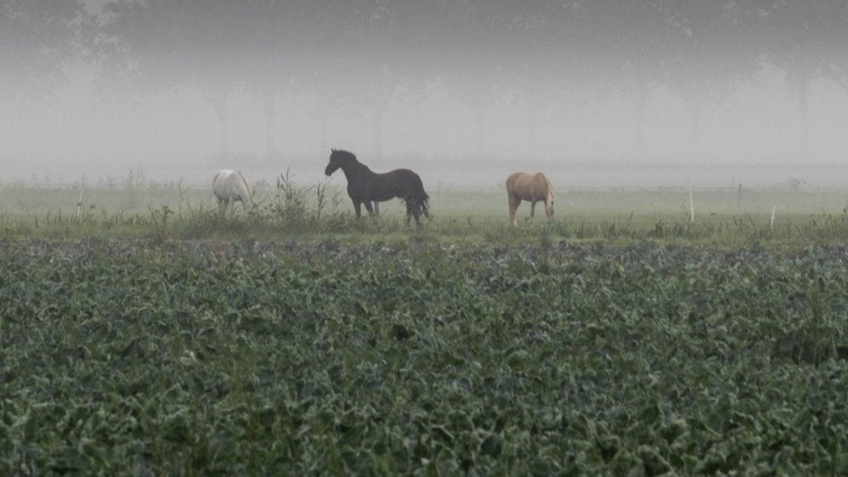 mező, mezőgazdaság, fű, ló, Ranch, kültéri, ég, köd, állati