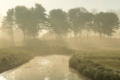 fog, mist, water, tree, landscape, swamp, swamp, forest, river, wetland