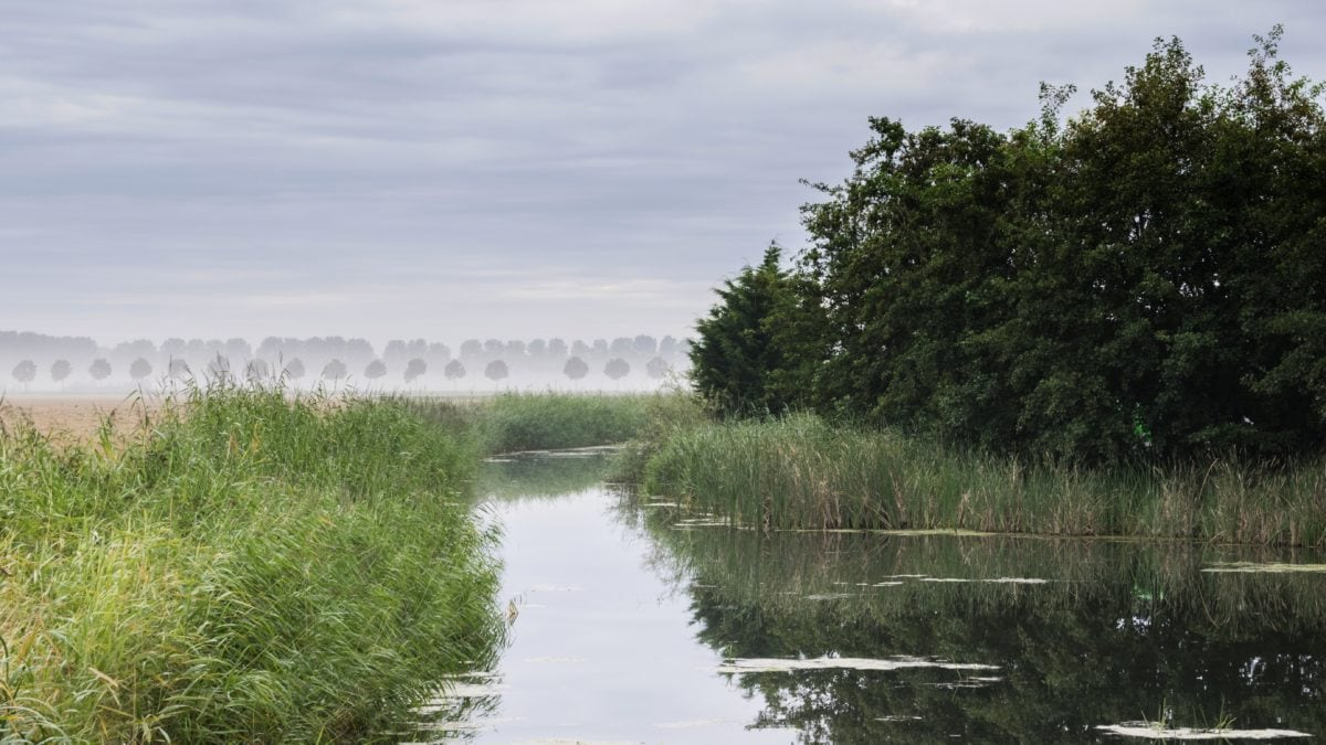 tree, reflection, nature, landscape, swamp, blue sky, lake, water, river