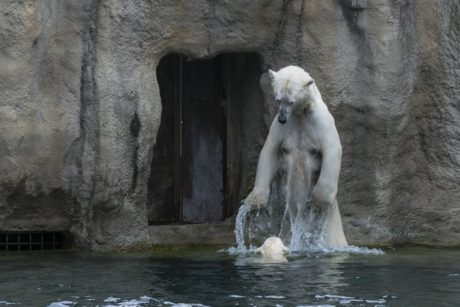 water, nature, white bear, cave, outdoor, zoology, omnivore, animal