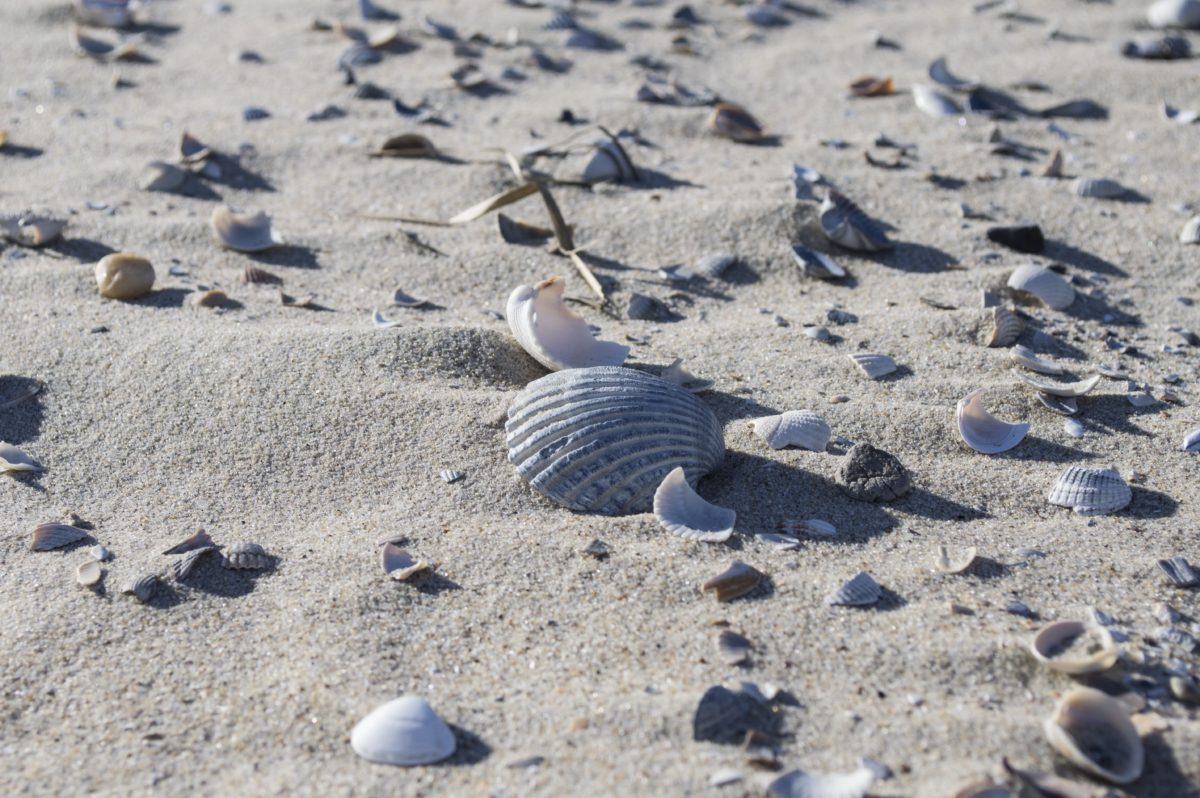 sand, dry, seashore, shore, shell, ocean, sea, beach, nature