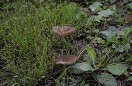erba verde, natura, legno, fungo, fungo, organismo