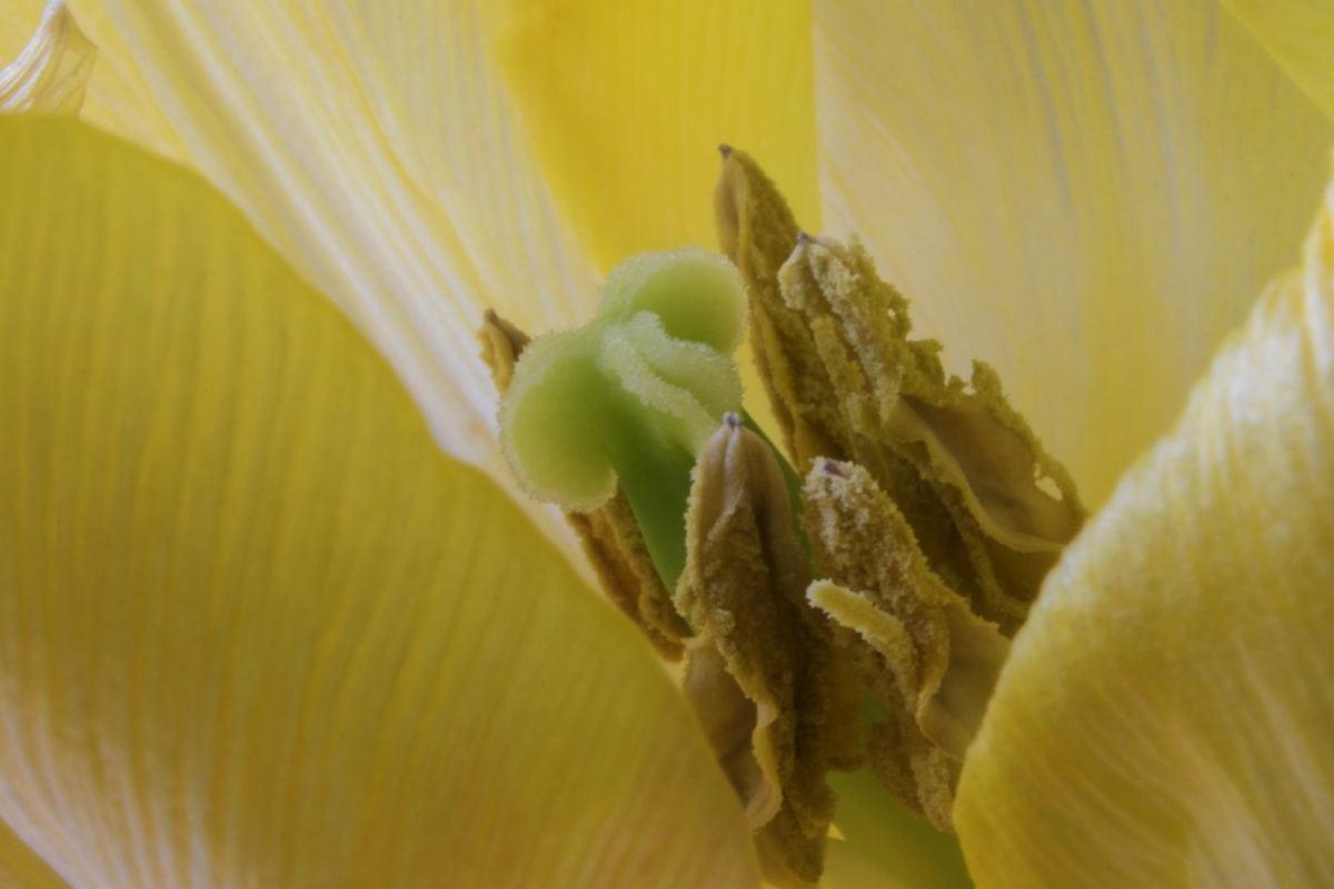 pistil, 꽃가루, 꿀, 세부 사항, 자연, 흰 꽃, 식물