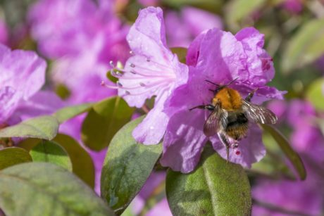 pollen, garden, nature, flower, leaf, bee, summer, insect