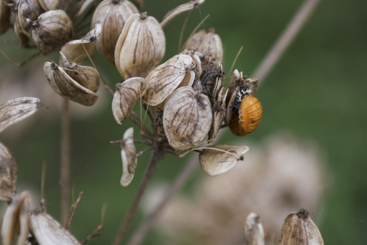 insect, detail, dry herb, outdoor, ecology