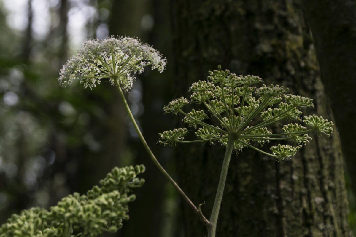 fiore, albero, foglia, giardino, natura, erba, pianta, outdoor