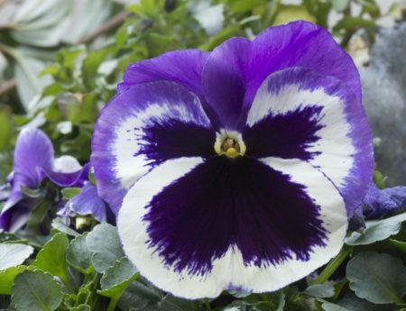 lato, Płatek, ogród, natura, liść, kolorowy kwiat, ziele, roślina