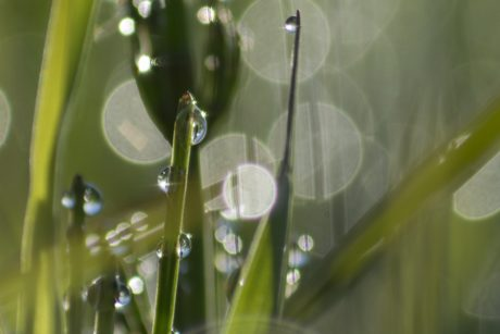 grass, rain, wet, droplet, leaf, nature, dew, garden, wet