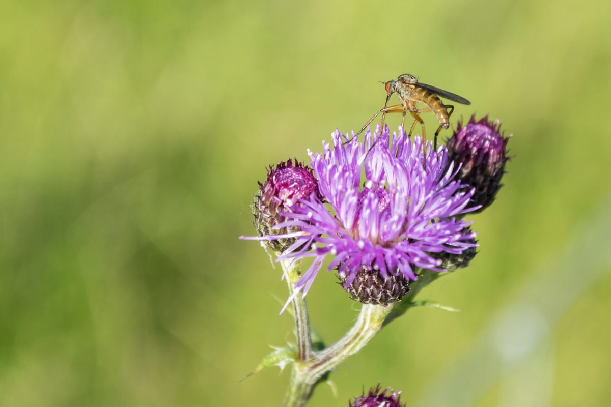 summer, grass, purple flower, nature, insect, herb