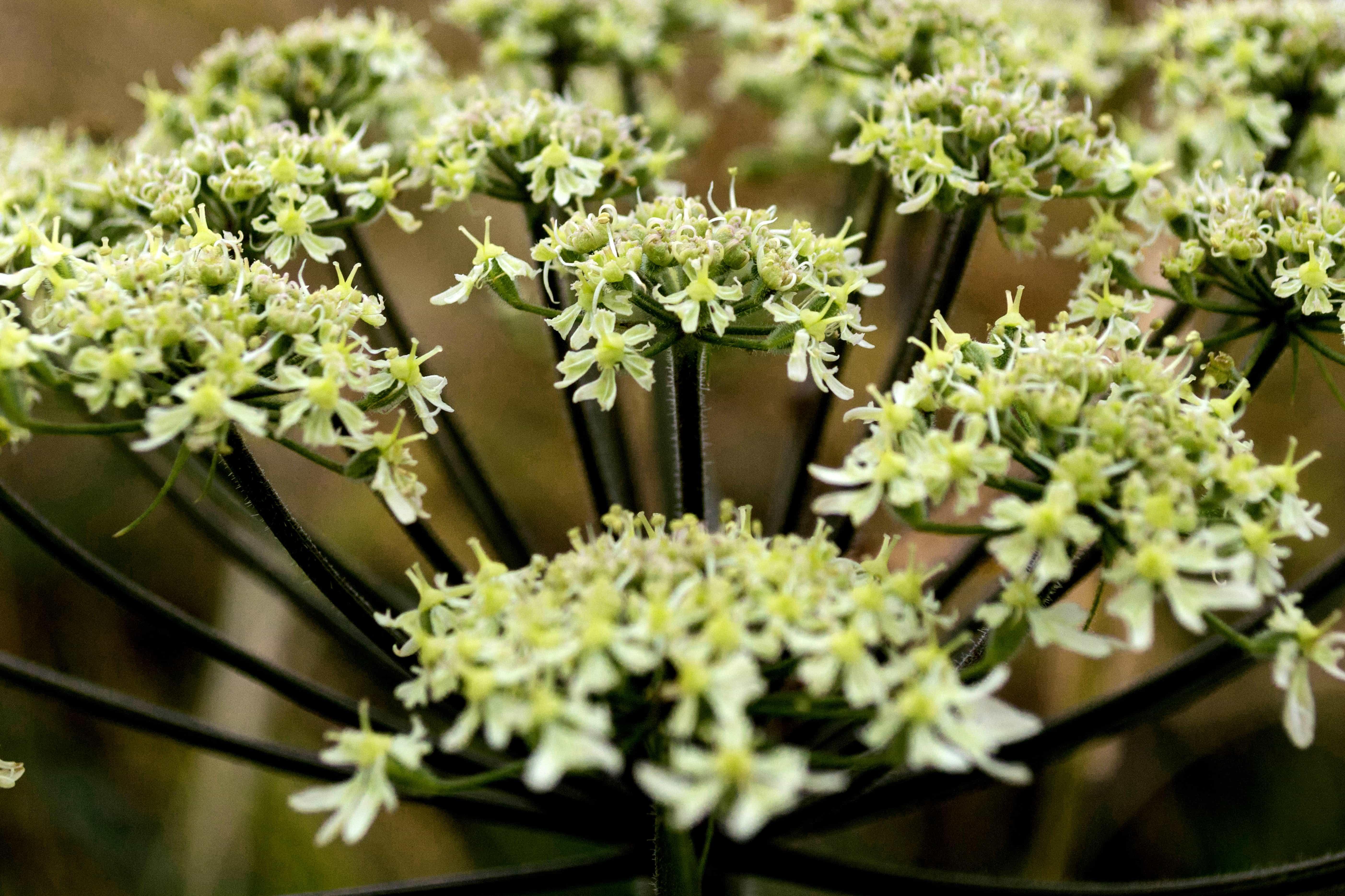 Зеленые цветы летом