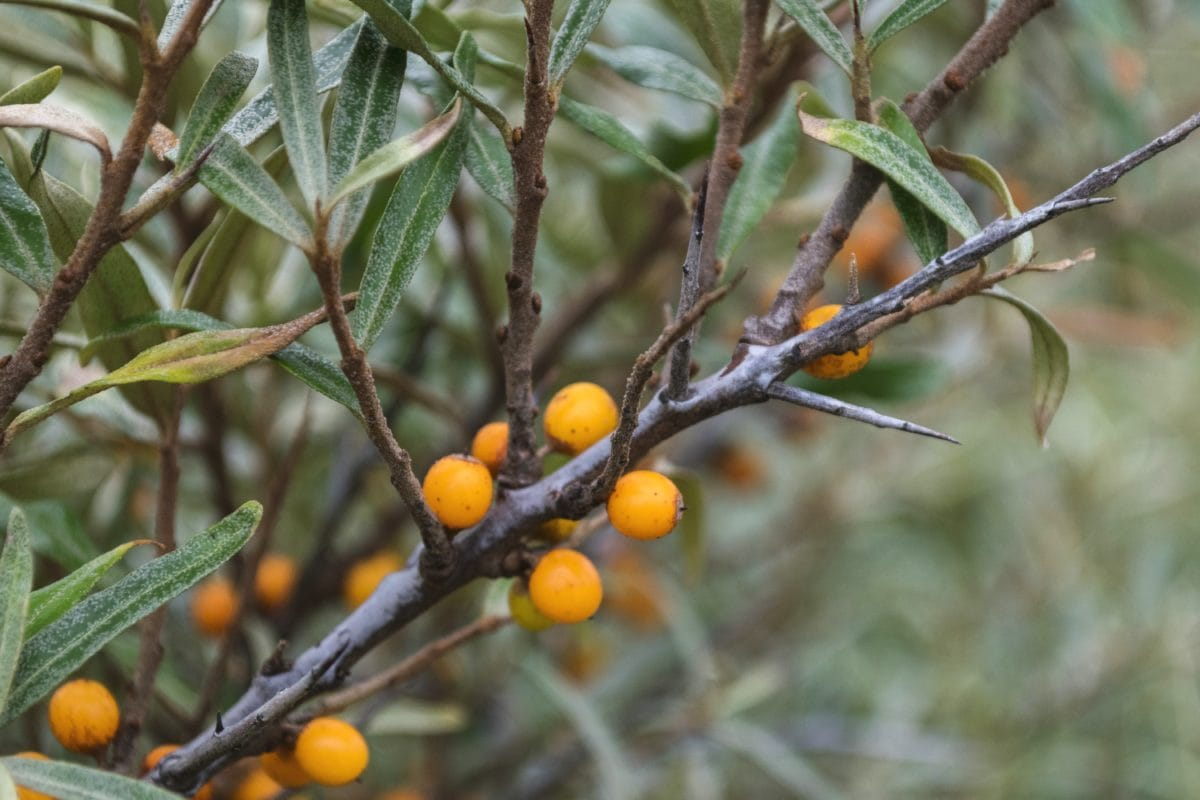 tree, leaf, nature, branch, shrub, outdoor