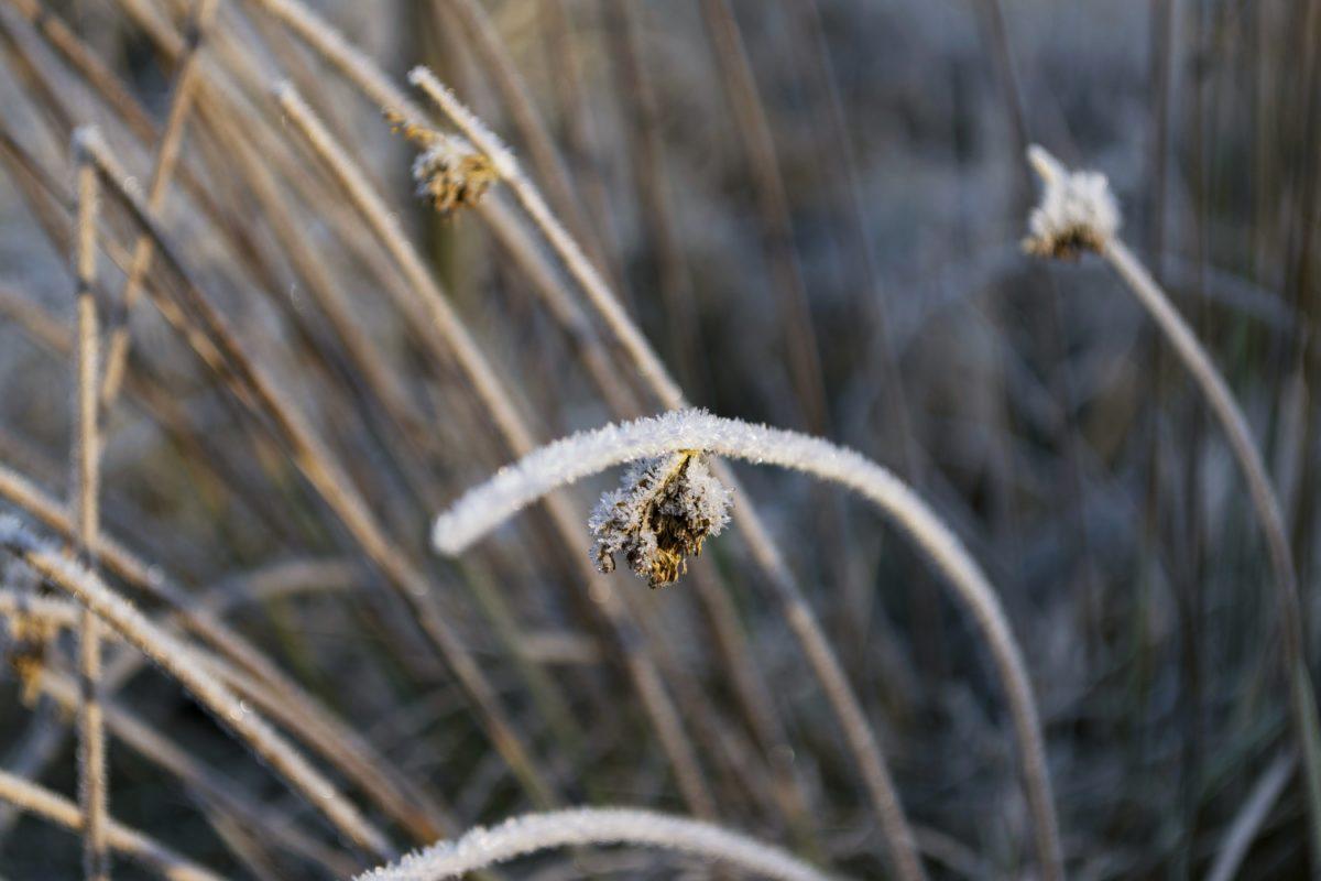 природа, зима, Мороз, рослина, трава, відкритий