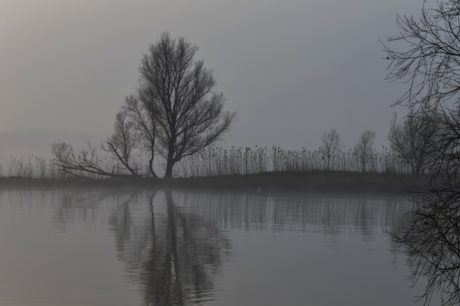 water, fog, reflection, mist, dawn, tree, lake, landscape, reflection