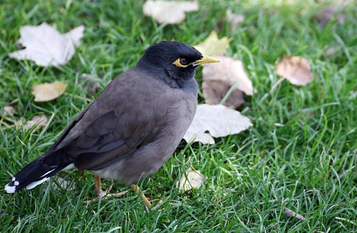 nature, animal, green grass, wildlife, bird, beak, wild, feather