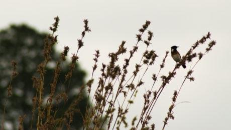 cielo, pájaro, naturaleza, hierba alta, fauna, al aire libre
