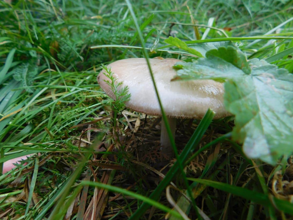 grass, fungus, wood, leaf, nature, food, mushroom, gren leaf