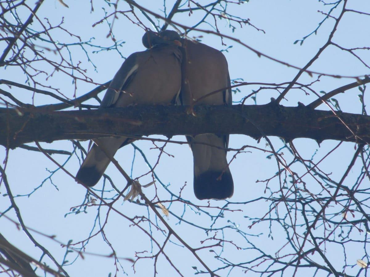 tree, winter, dove bird, sky, branch, outdoor