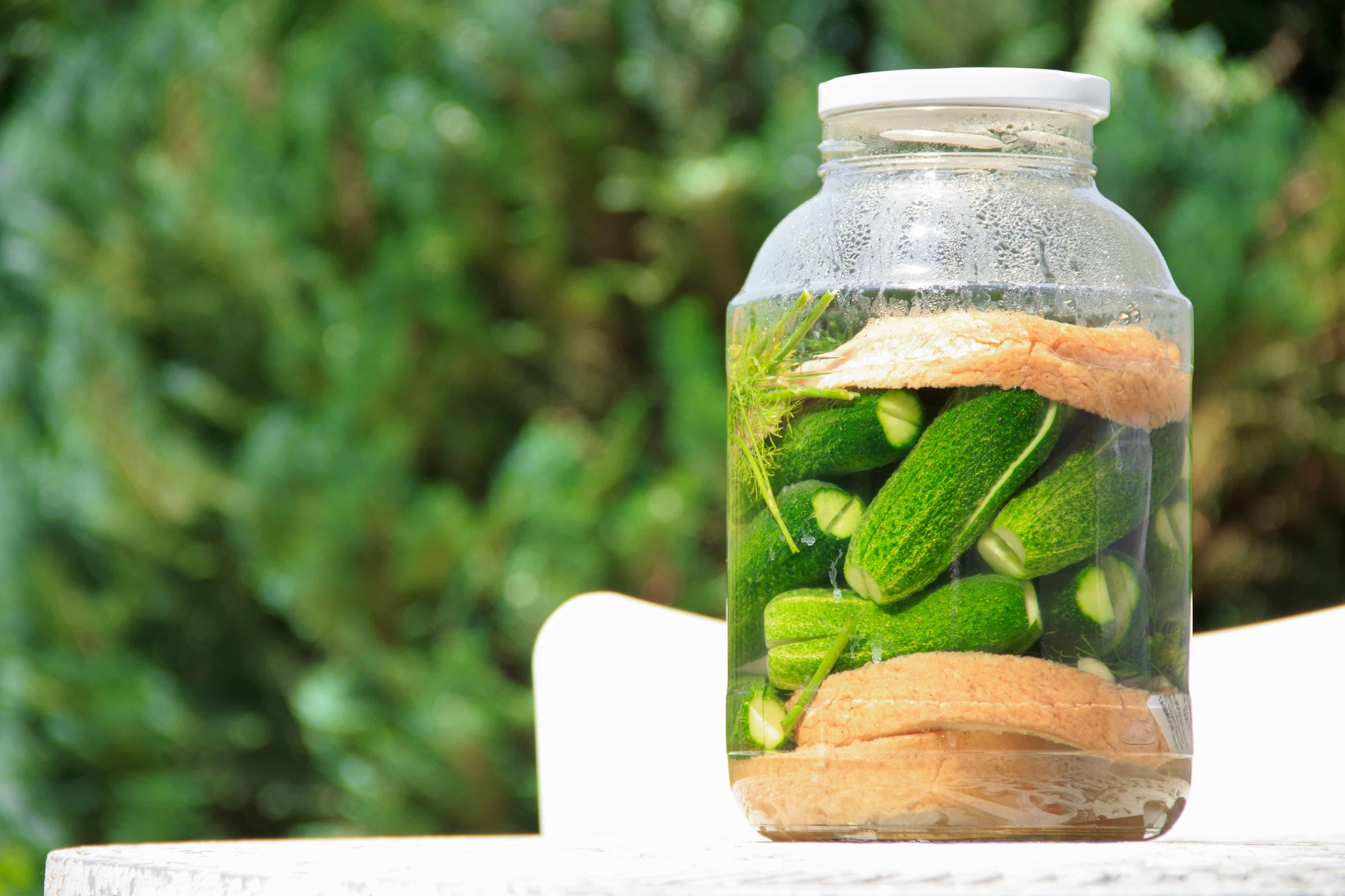 Gratis Billede Salat Agurk Sur Natur Fødevarer Organisk
