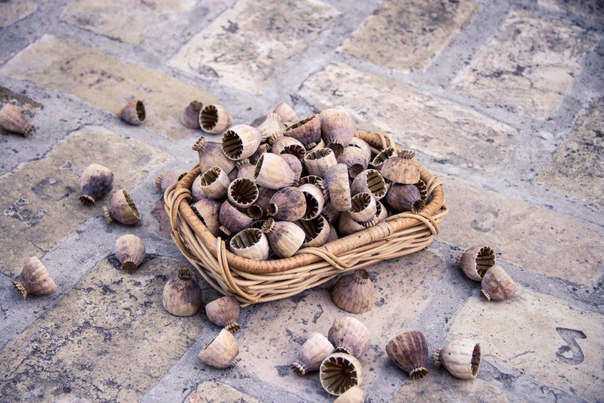 Giỏ, hạt giống, thực phẩm, hữu cơ, vỏ, nâu
