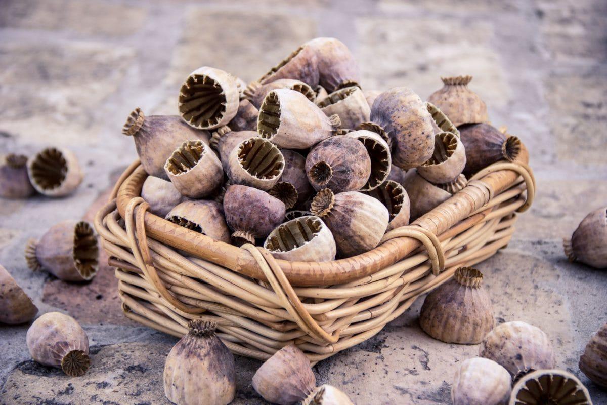 hạt nhân, giỏ wicker, hạt giống thuốc phiện, hữu cơ, thực phẩm, thực vật, vỏ