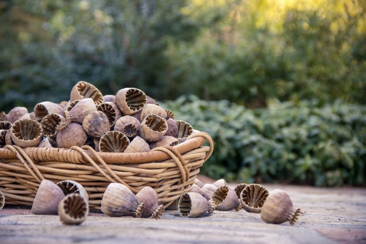 poppy, wicker basket, nature, plant, seed, organic, food
