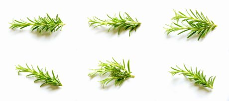 green leaf, rosemary, plant, spice, nature, herb