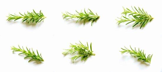 feuille verte, romarin, plante, épice, nature, herbe