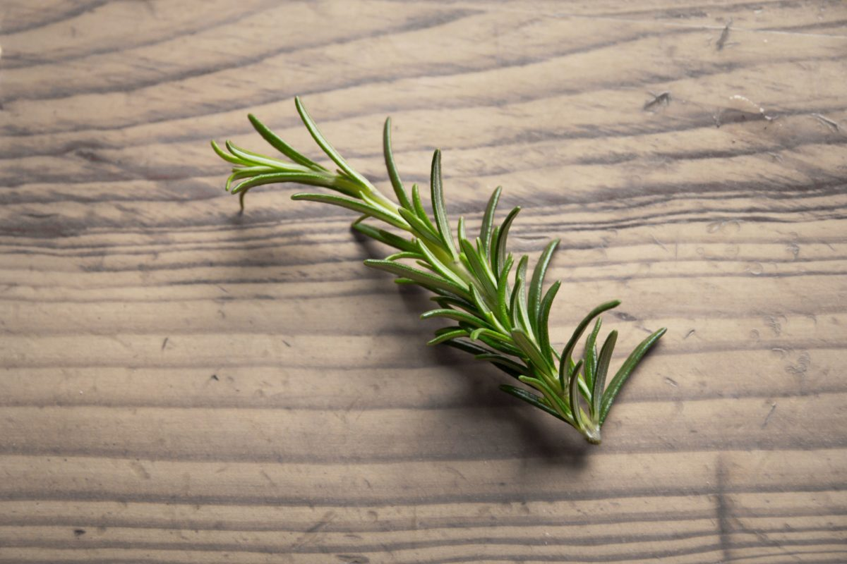 spice, nature, plant, onion, vegetable, rosemary, herb