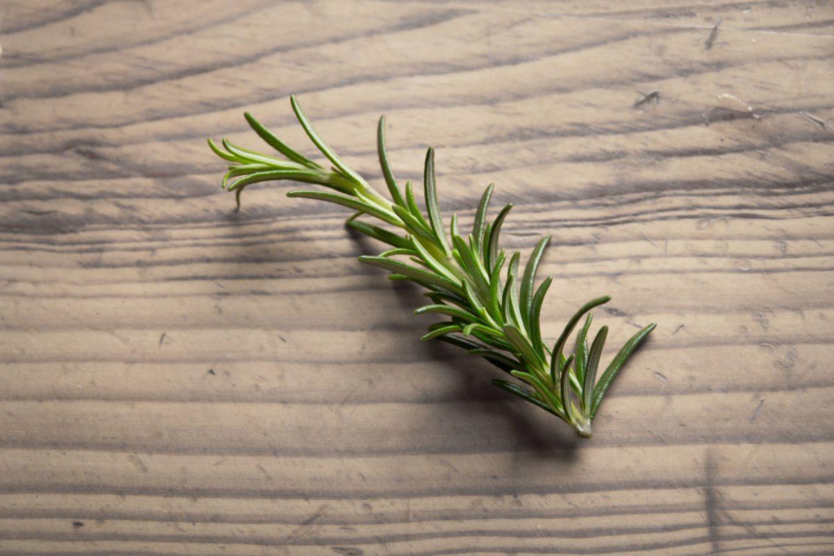 especia, naturaleza, planta, cebolla, vehículo, Romero, hierba