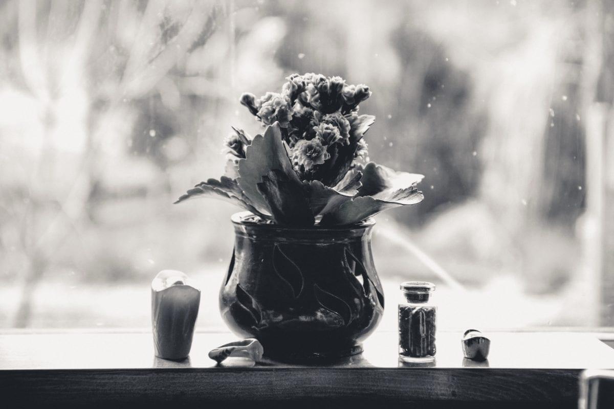 flower, inside, plant, decoration, window, object, monochrome, vase