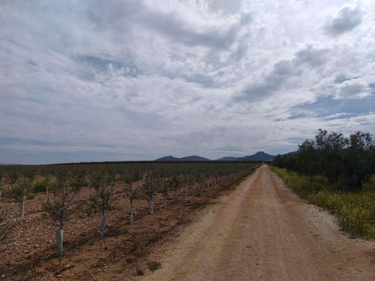 landbrug, Frugtplantage, blå himmel, landskab, vej, udendørs, græs, jord, Sky