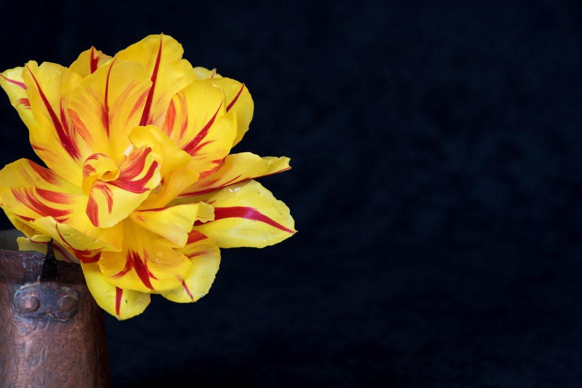 nature, fleur, pétale, plante, fleur, fleur, jardin de fleur