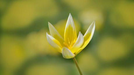 Sommer, Natur, Blatt, Blume, Lotus, Pflanze, Blütenblatt, Garten