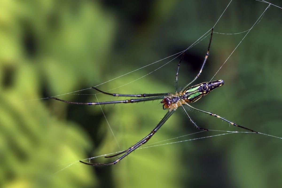 insekter, edderkopper, natur, leddyr, spindelvev, dyr, virvelløse