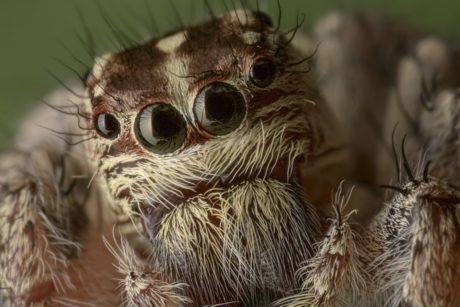 wildlife, animal, nature, brown spider, eye, head, insect