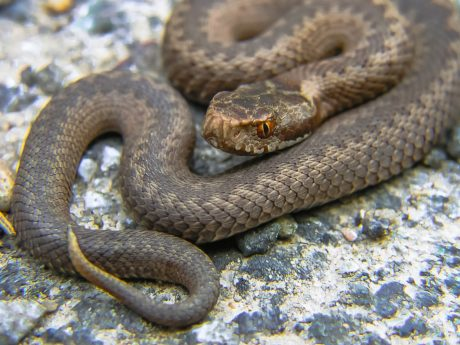 wildlife, wild, nature, animal, brown snake, reptile, zoology, biology