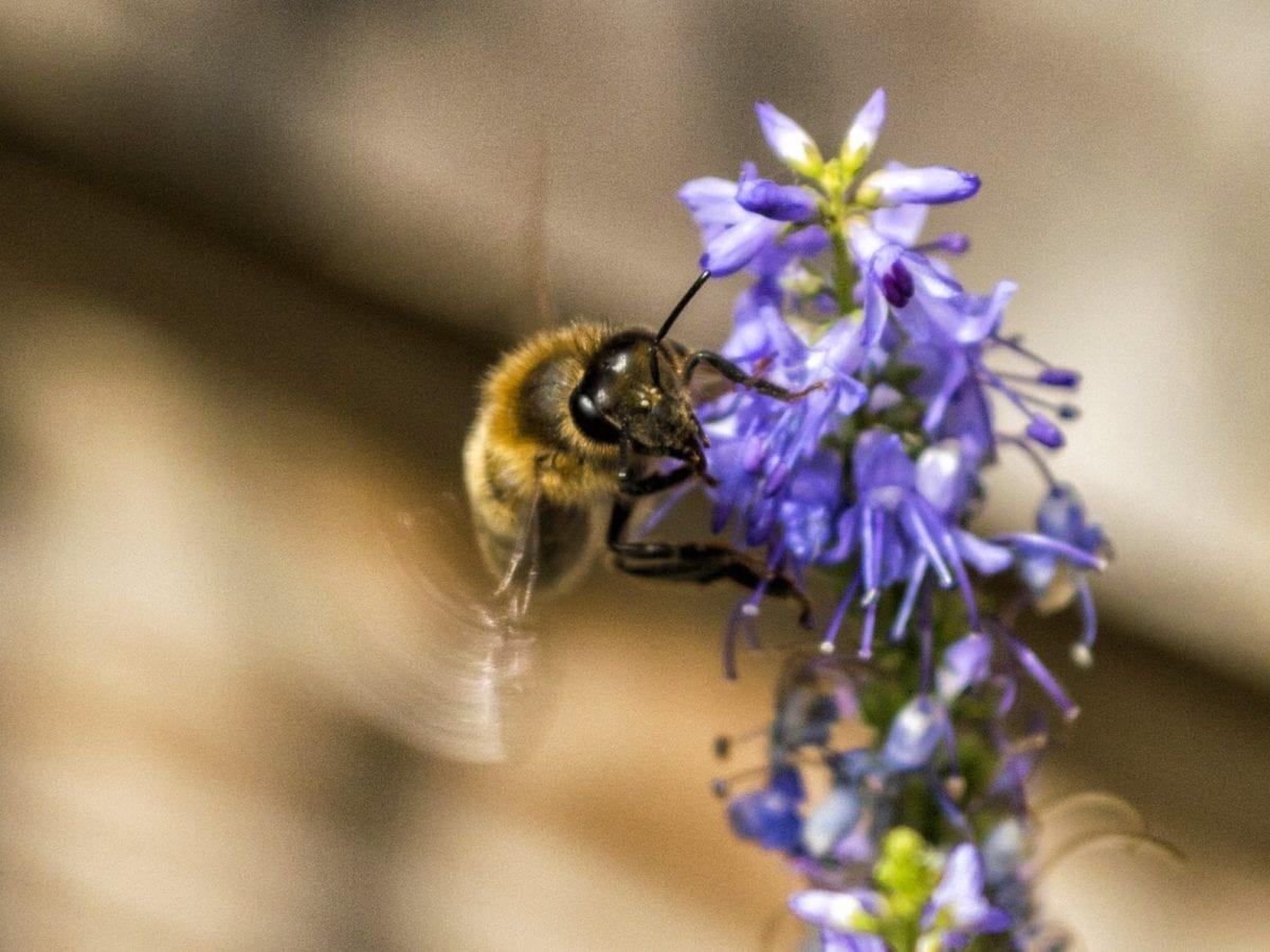 자연, 곤충, 꽃, 벌, 식물, 목초, 절지동물, 정원