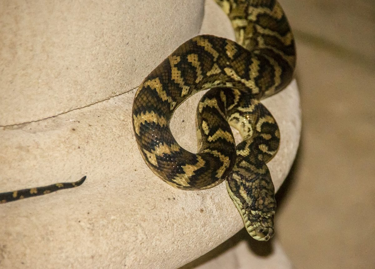 zoology, animal, snake, venom, reptile, danger, wildlife